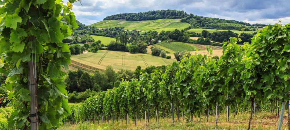 wijngaard in Heilbronn